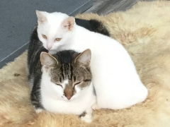 Mr Daisy and Mr Macavity laze around at Rock Cottage