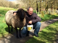 Ludo Adopted Sheep