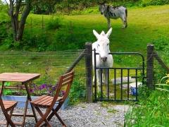 Meet the Neighbours. Hire our cute little Garden Chalet - SummerHouse