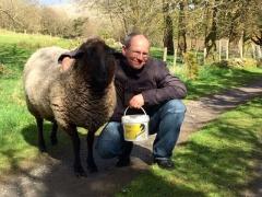 Ludo Adopted Sheep