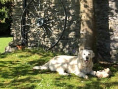 Dog Friendly Self Catering Cork Ireland