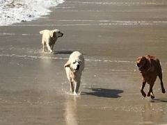 Dogs Enjoying the Beach West Cork Ireland