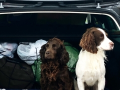Pet Friendly Self Catering Dogs Ireland