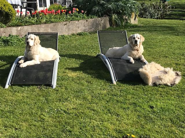 Dog Friendly Holiday Cottages Ireland